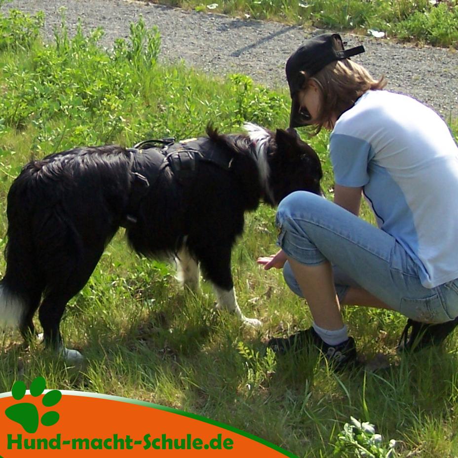 Schulhund in der Schule - Schulhundeausbildung