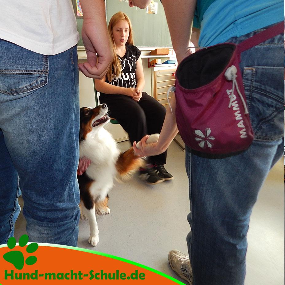Besuchshund Monty Magdeburg17