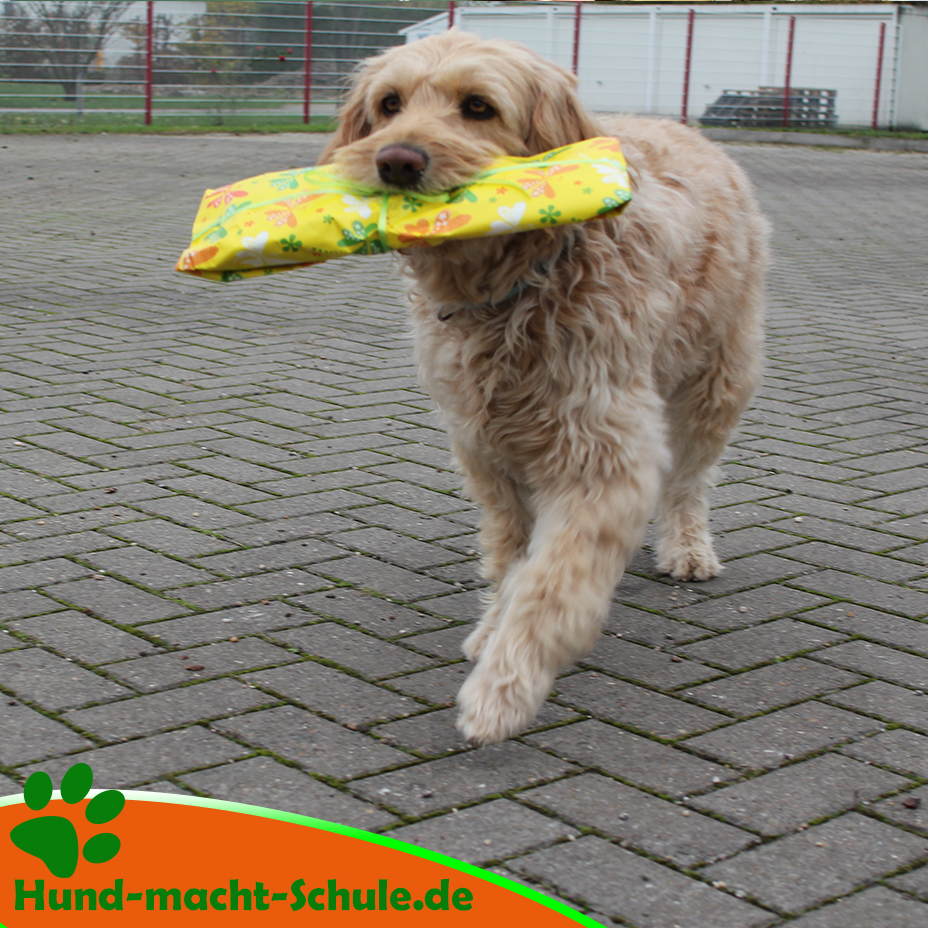 Lilli Schulhund (Schulhündin)