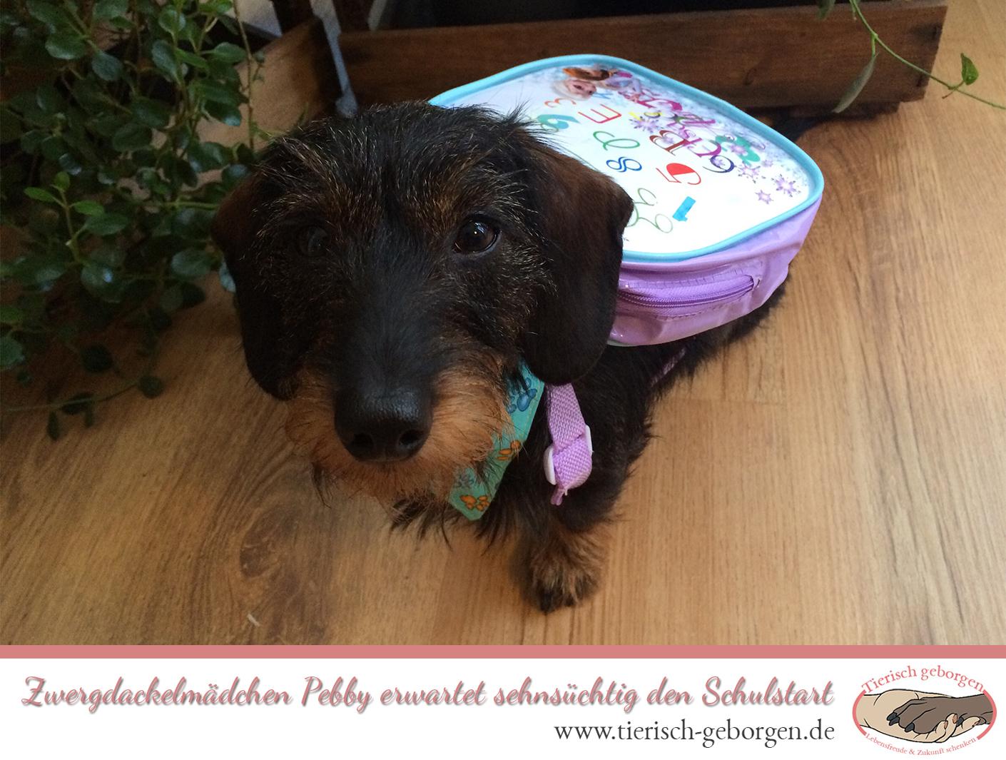 Schulhund Pebby