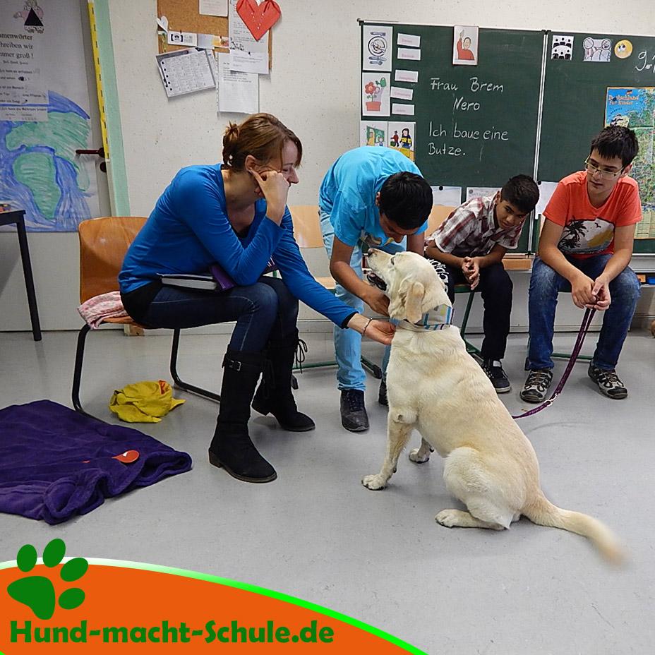 Schulhund Nero