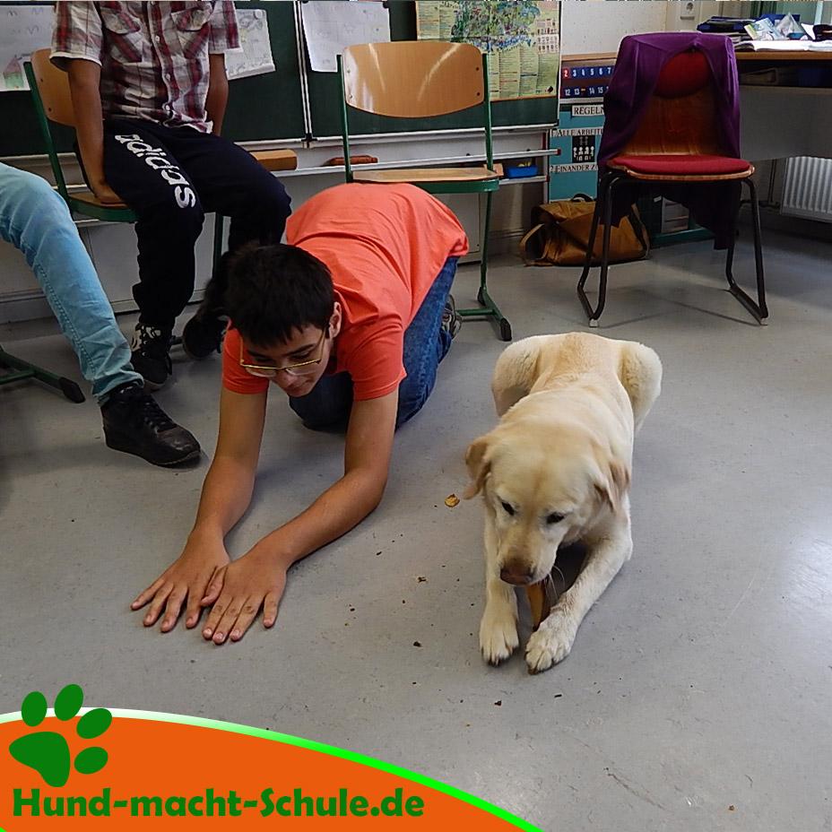 Schulhund Nero11
