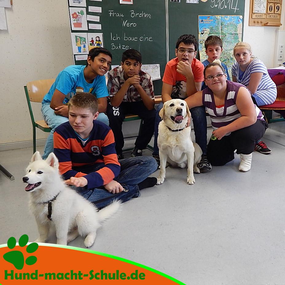 Schulhund Nero7