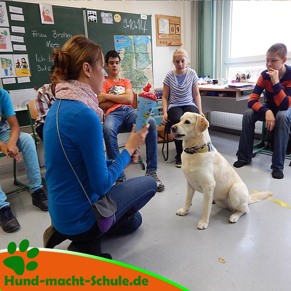 Schulhund Nero8